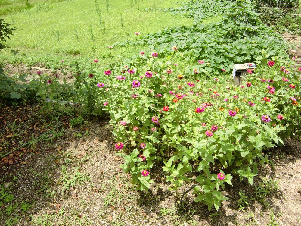 花壇の状況