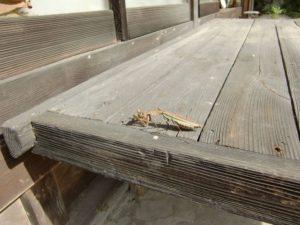 バッタを捕食中のカマキリ