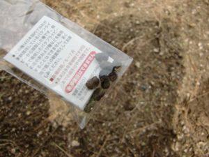 バタフライピーの種